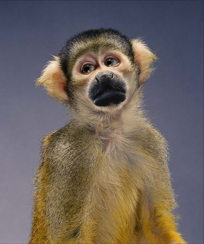 Read more about the article Monkeys And Dogs And Bears. Oh My! Jill Greenberg's Photos