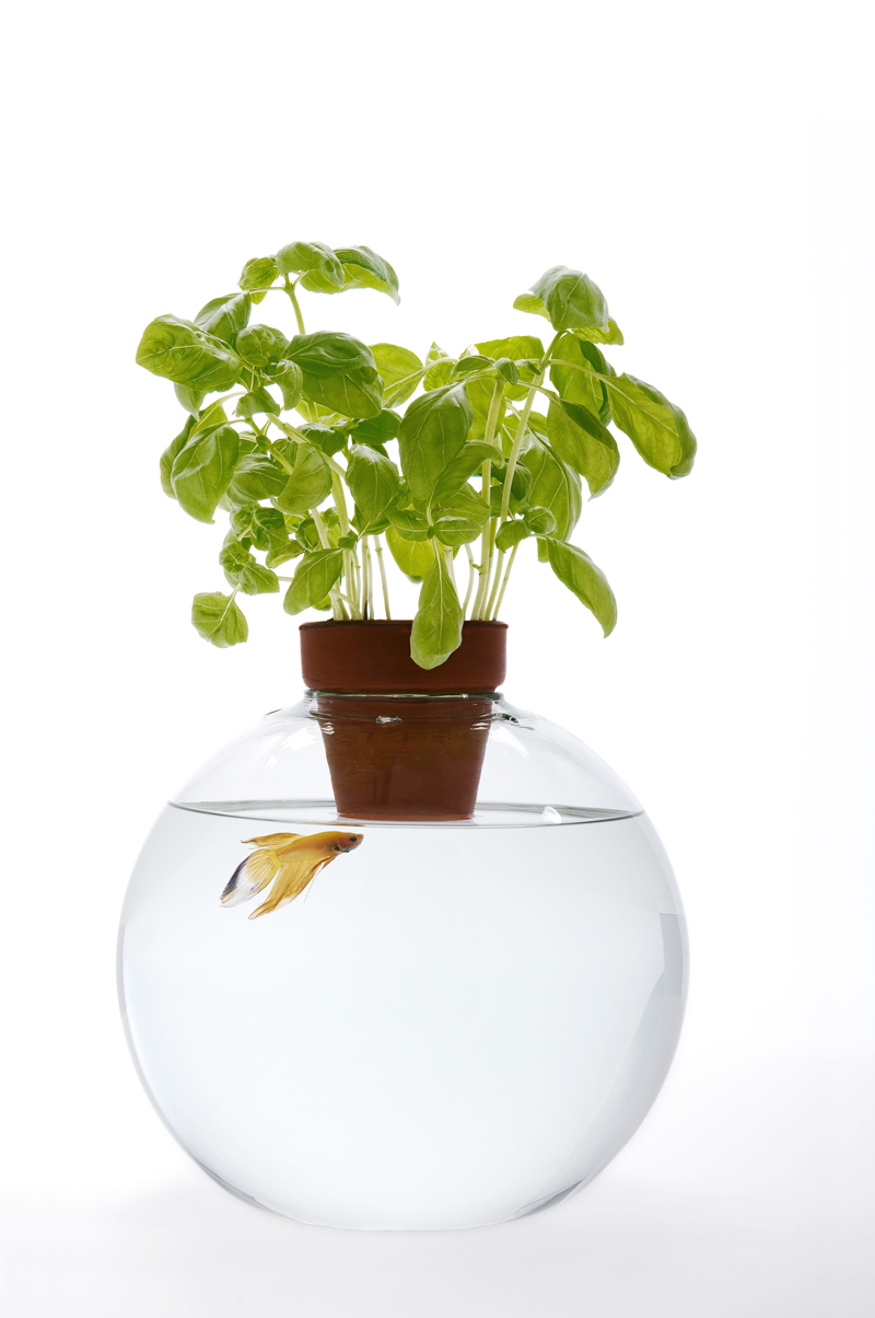 Unusual blown glass fish bowls by roger arquer if it 39 s for Fish bowl plants