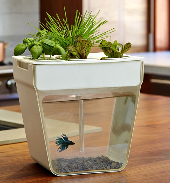 The Aquafarm Is A Self-Cleaning Fish Tank And Herb Garden In One.