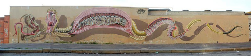 Dissection of a Snake (Torino,Italy April 2013) Nychos, IIHIH