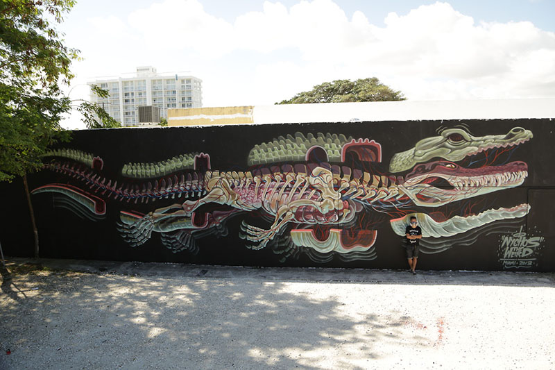 dissection of a gator (miami 2013) Nychos IIHIH