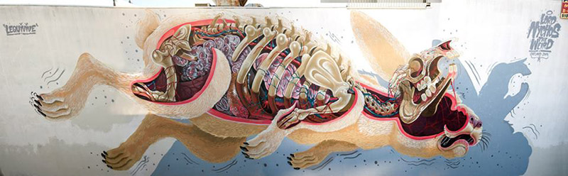 dissection of the easter rabbit Oakland, CA Nychos IIHIH