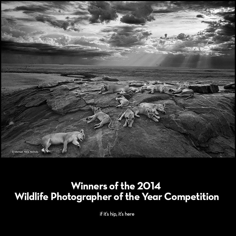 2014 wildlife photograher of the year competition winners