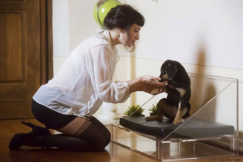 exential with puppy and woman IIHIH
