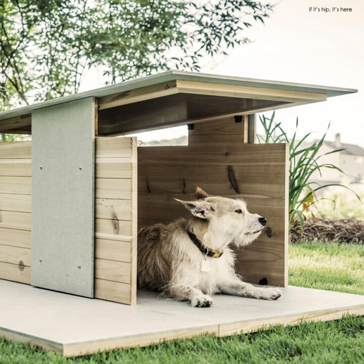 Dog Digs to Love: The Puphaus by Pyramd Design Co