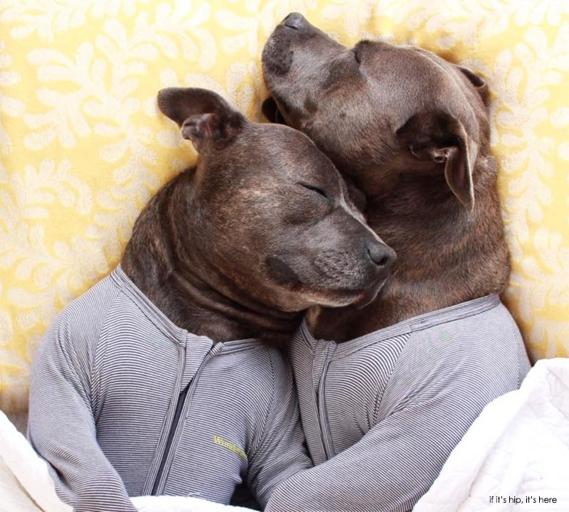 Meet Two Dogs Who Are Cuter In Onesies Than Your Kids