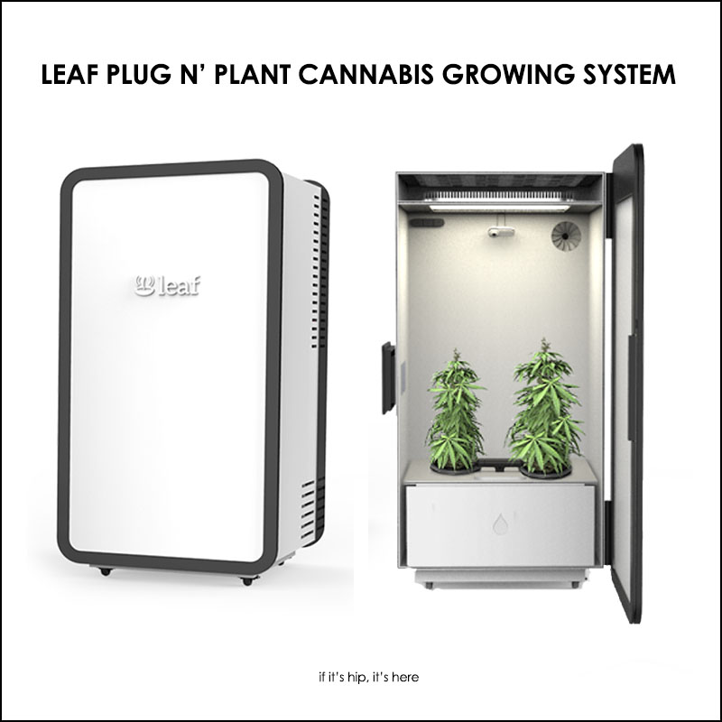 Marijuana Grow Boxes Go High Tech Leaf Cannabis Home Growing System - if itu0027s hip itu0027s here  sc 1 st  If Itu0027s Hip Itu0027s Here : box for growing weed - Aboutintivar.Com