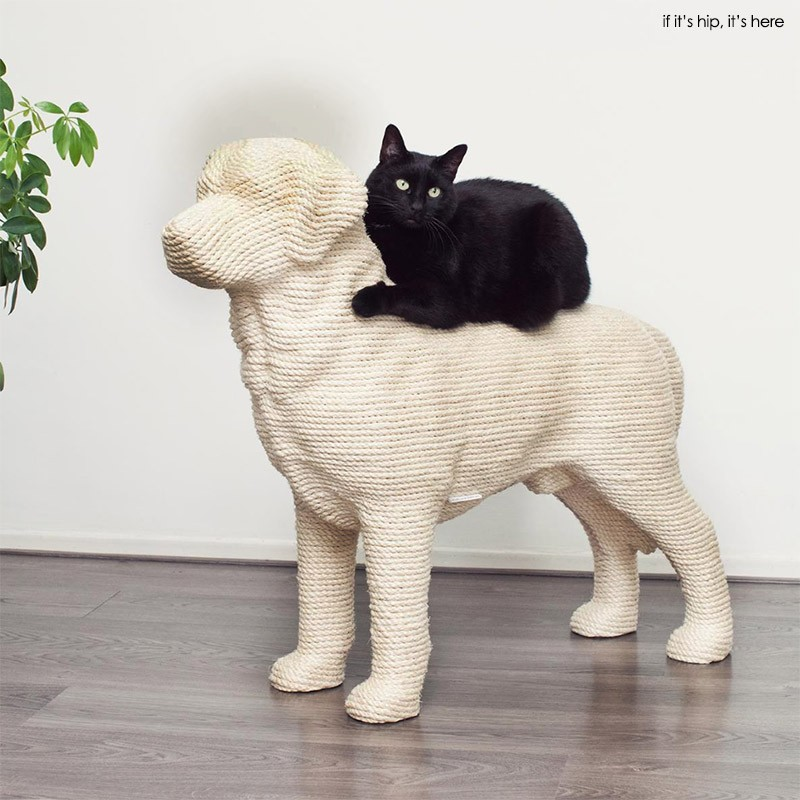 dog with cat5
