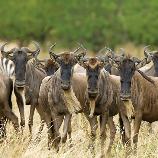 Great-Migration-Feature-Image-Aftrica