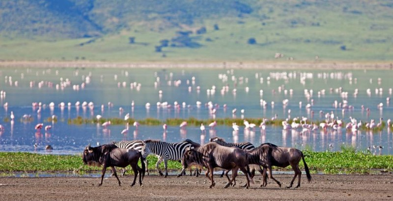 The-Highlands-wildebeest-and-flamingos