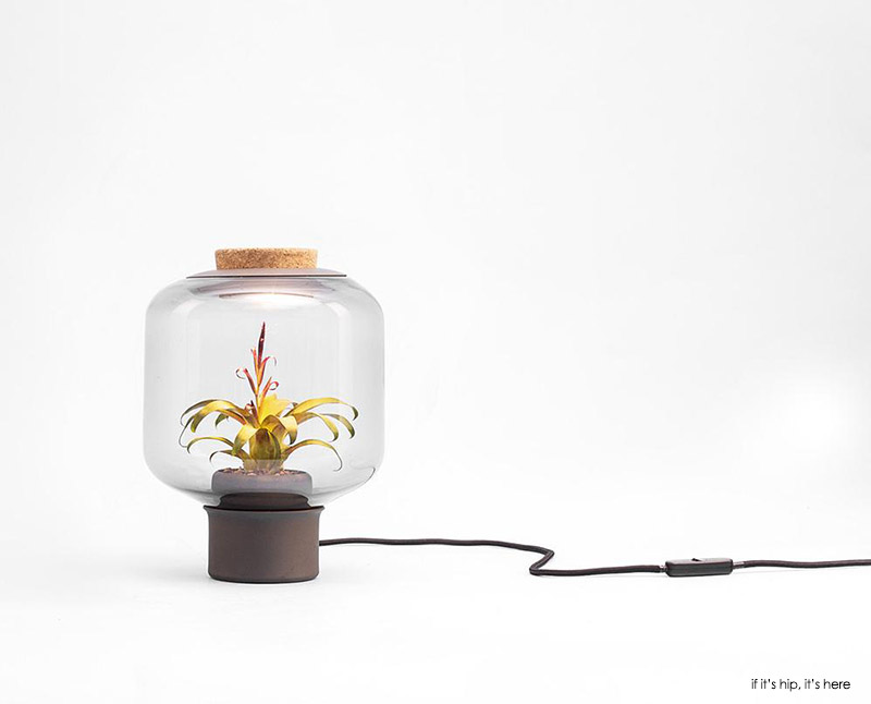 Mygdal a terrarium like lamp that does need natural light at if it's hip, it's here