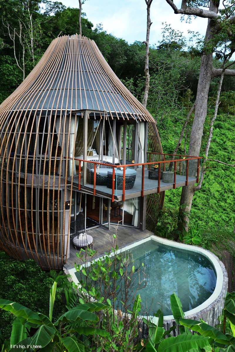 tree house pool villa at if its hip its here