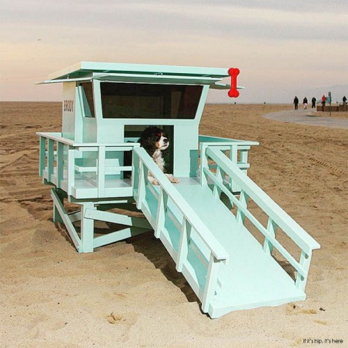 Read more about the article The Lifeguard Stand Dog House by Charles Lushear