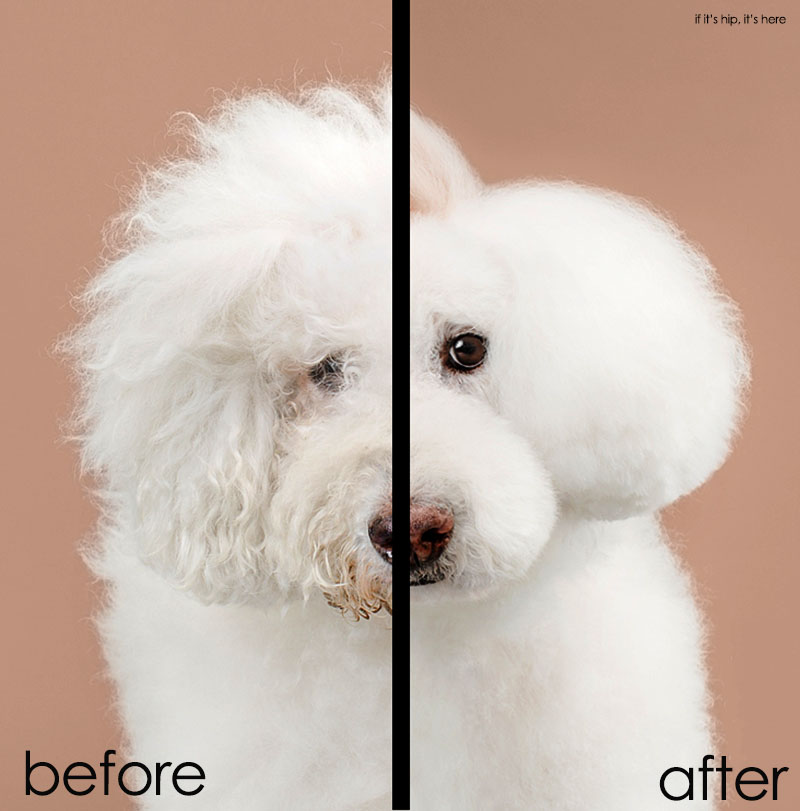 grace chon dog grooming book