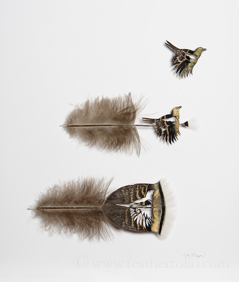 liftoff-1-turkey-feathers-14-by-12-inches-2015