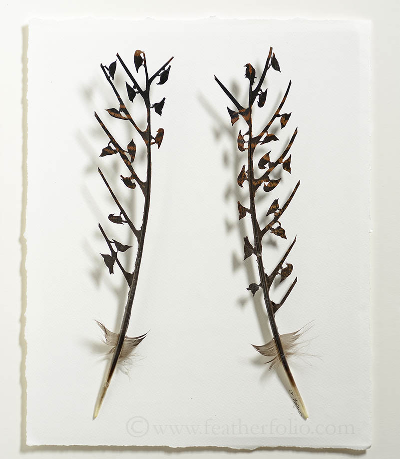 mixed-flock-wild-turkey-feather-17-by-14-inches-sold-2014