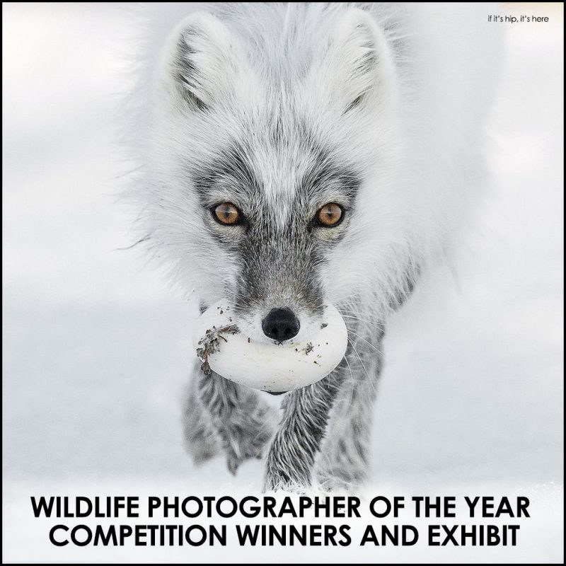 Wildlife photographer of the year competition winners