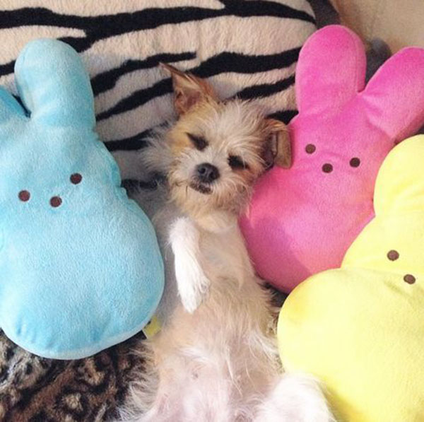 dogs and peeps