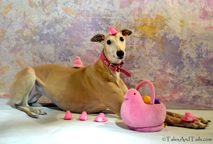 greyhound with easter toys