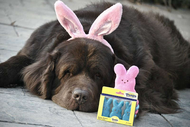 pups and peeps