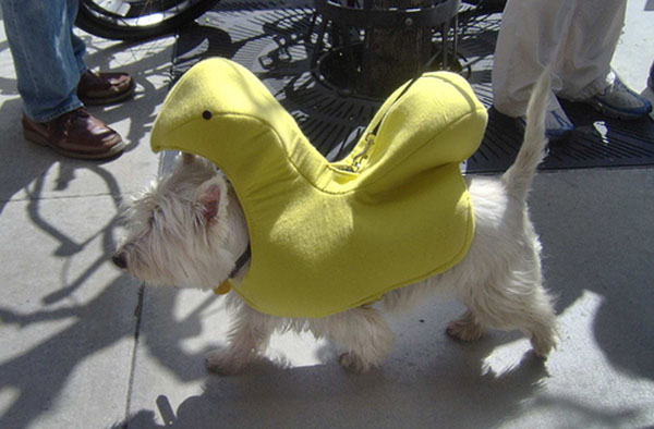 dog in peep suit