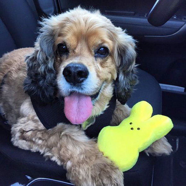 dogs with dog toys