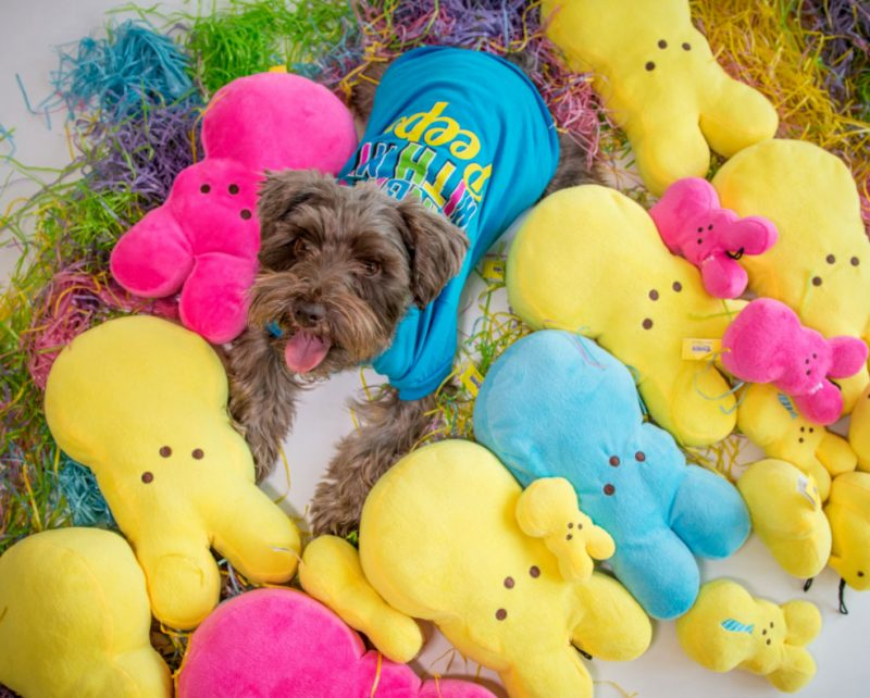 dogs and easter peeps