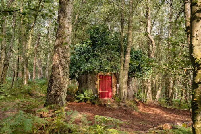 Pooh's house airbnb 1