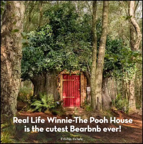 Read more about the article Tut tut! Someone Got To Stay At Pooh's House and It Wasn't Me!