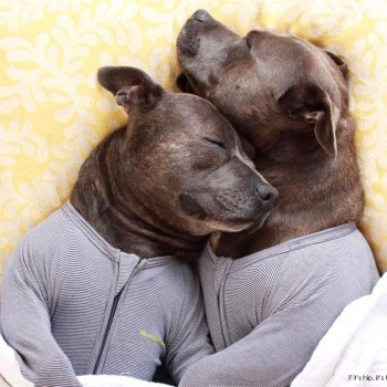 Meet Two Dogs Who Are Cuter In Onesies Than Your Kids: Darren and Philip.